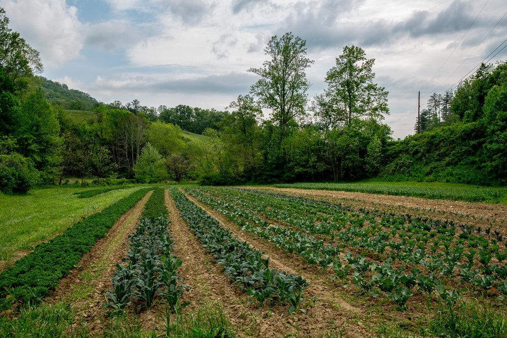 West Ashe - Paper Crane Farm - Fields