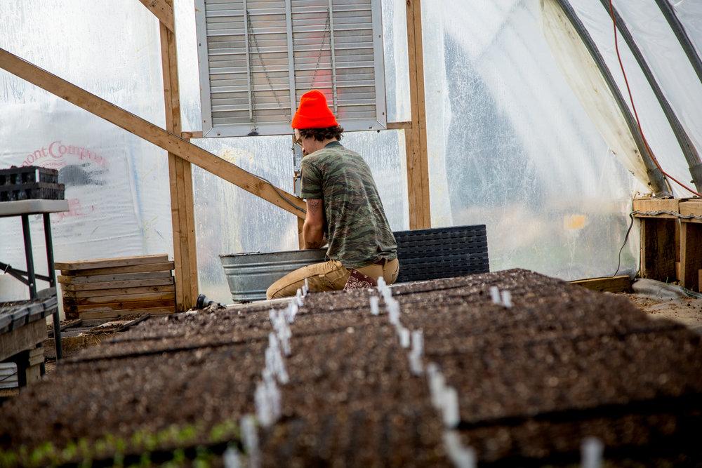 West Ashe - Paper Crane Farm - Seeding