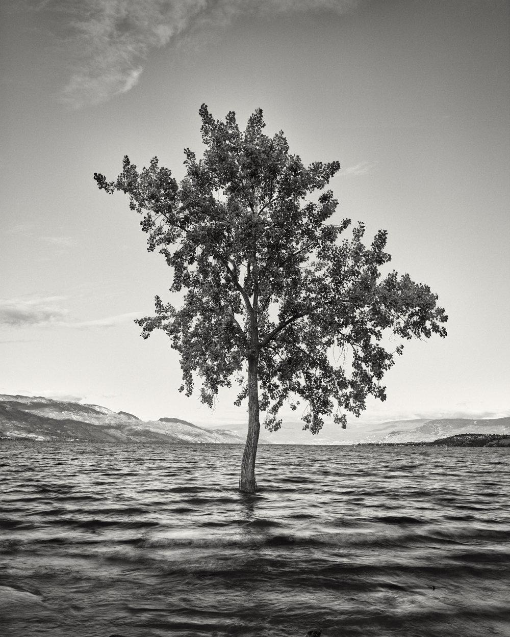 Drowning Nature.jpg