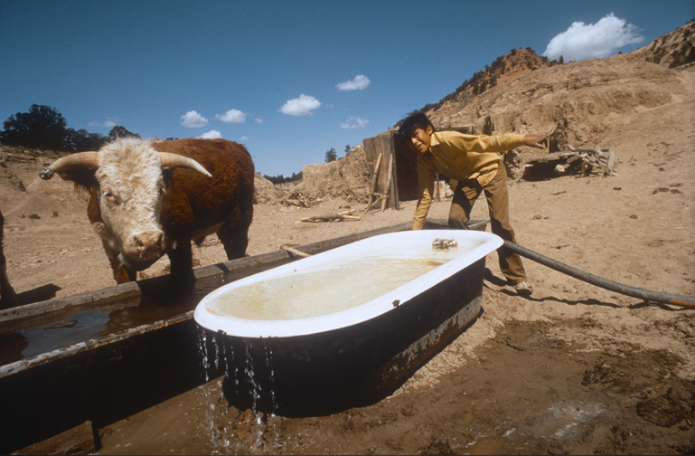 navajo cow bathtub.jpg