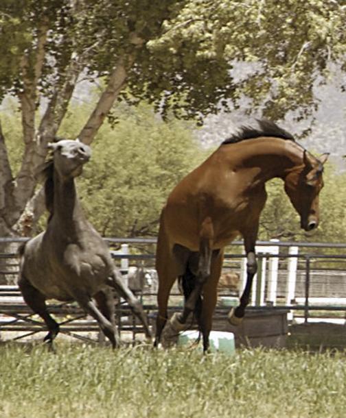 horses  mares jumping.jpg
