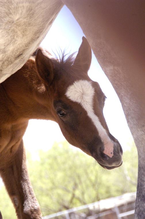 horses peepie.jpg