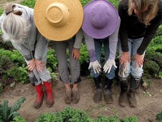 Slow Harvest Gleaning_2.jpg