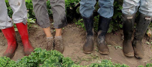 Slow Harvest Gleaning.jpg
