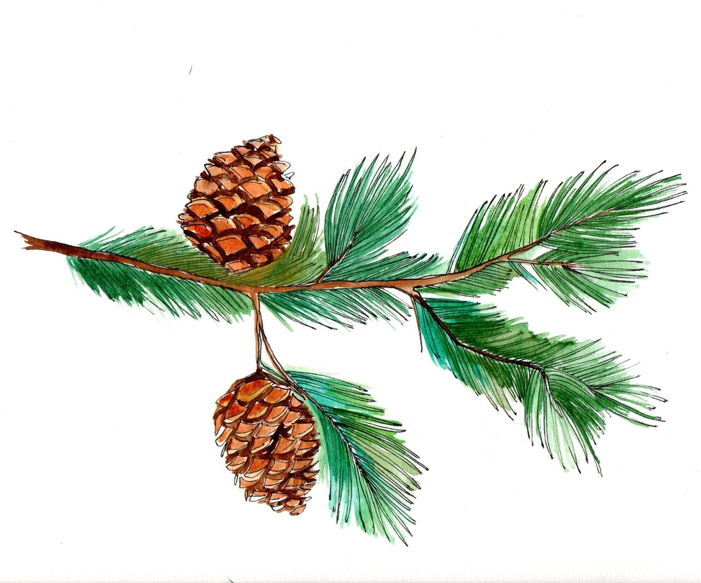 pinecone007.jpg