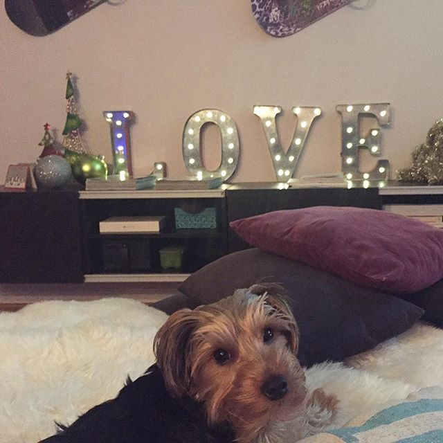 🐶 #holidayseason #puppylove #interiordesign #decor #light #cool #cute #dog