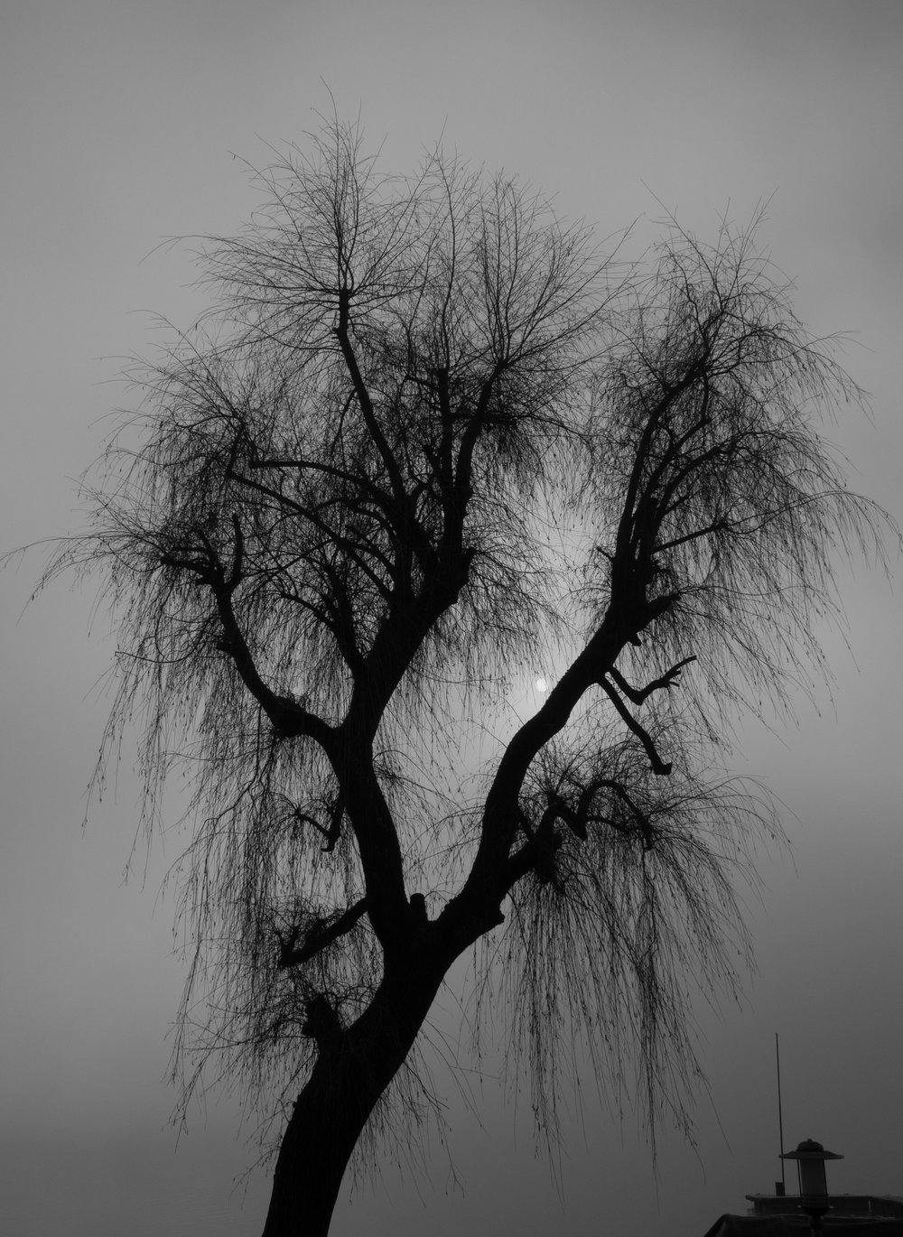 Spectral Tree