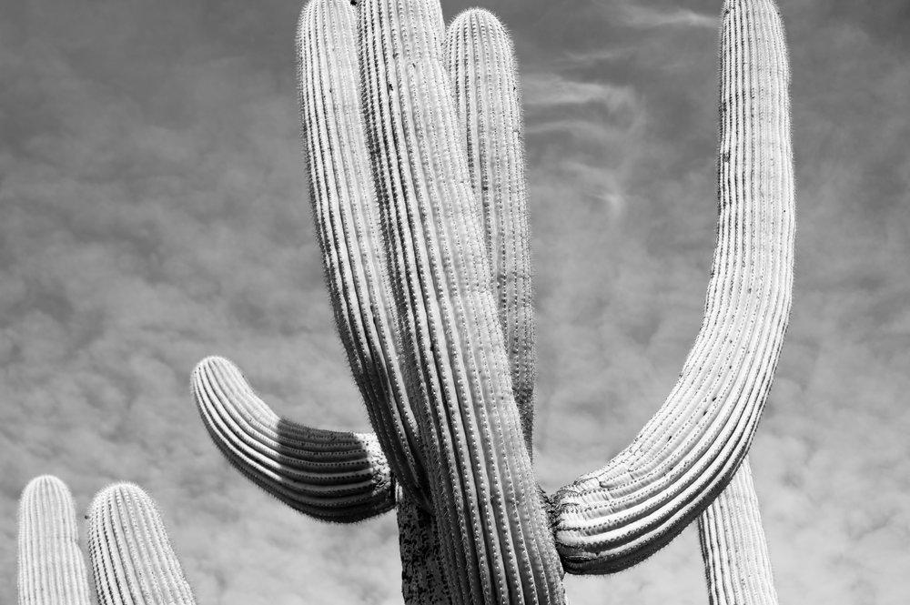 cassandra_artprints_saguaro-1.jpg
