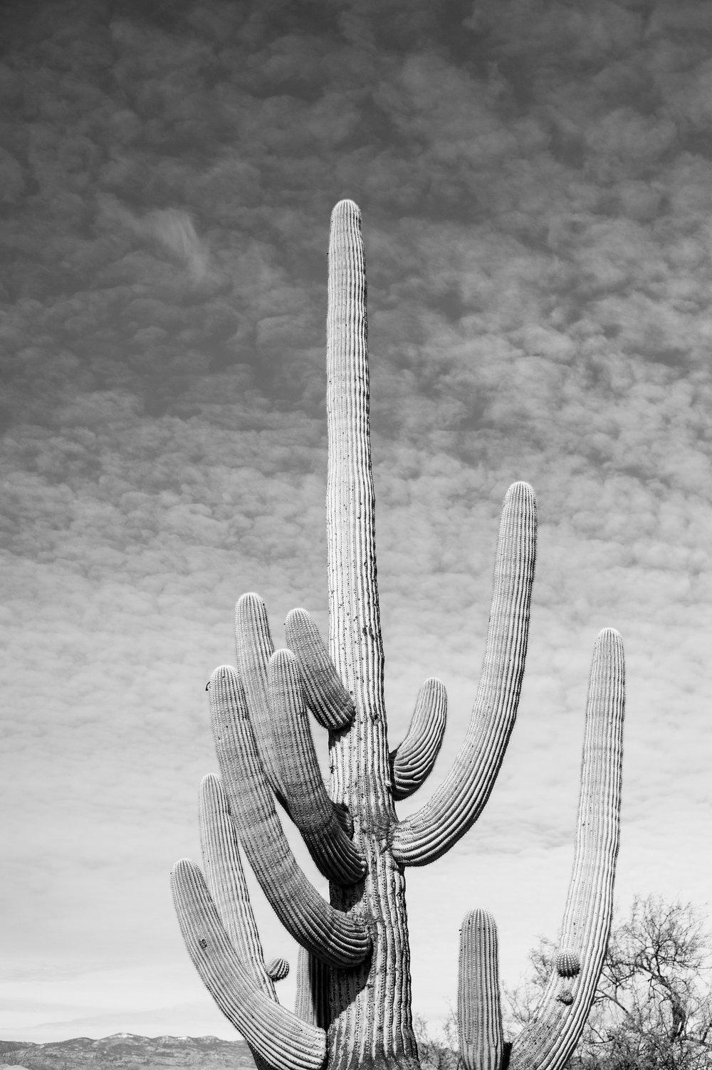 cassandra_artprints_saguaro-3.jpg
