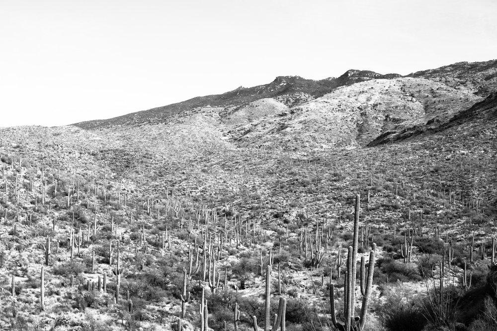 cassandra_artprints_saguaro-4.jpg