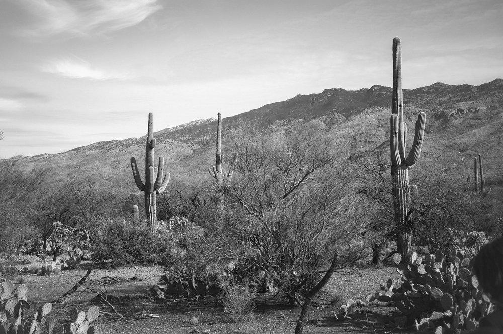 cassandra_artprints_saguaro-5.jpg