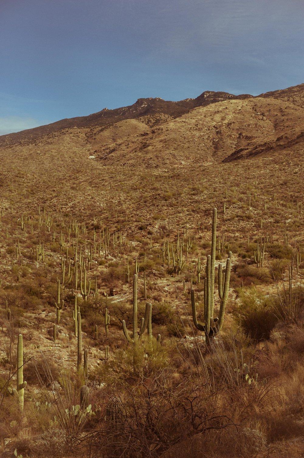 cassandra_artprints_saguaro-9.jpg
