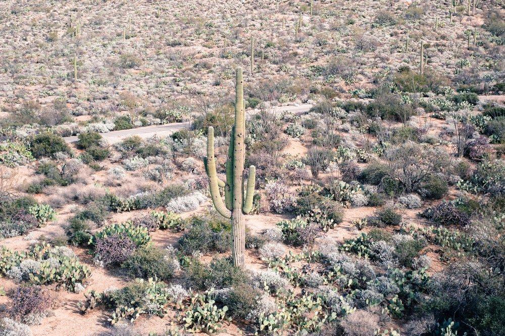 cassandra_artprints_saguaro-11.jpg