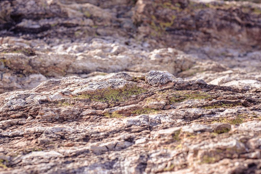 cassandra_artprints_saguaro-12.jpg