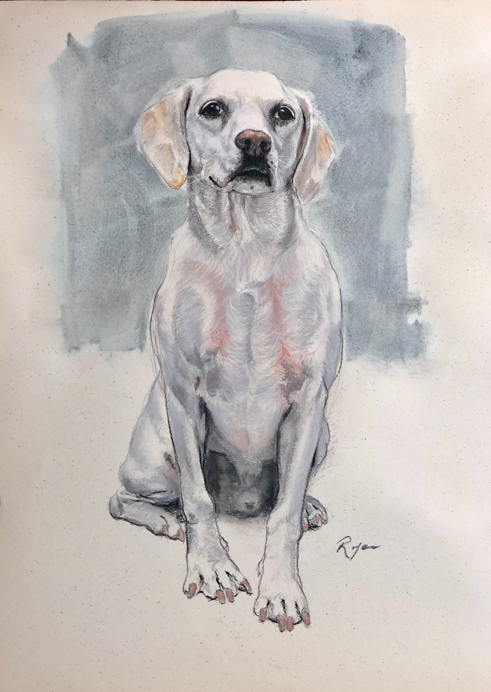"Rocky, 19"" x 25"", charcoal, watercolor and dry pastels on paper"