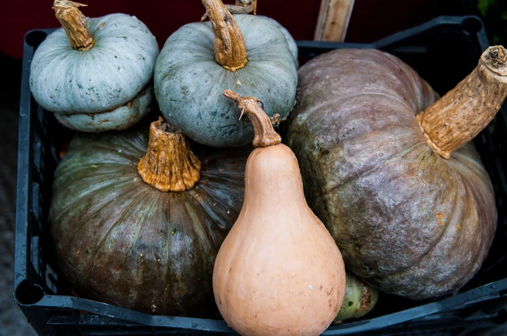 pumpkins in the Italian market