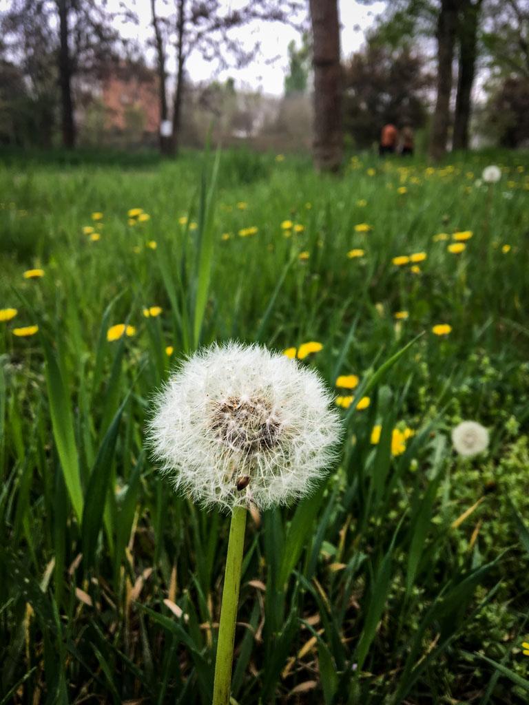 daffodil-pollen.jpg