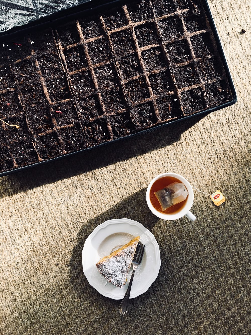 Insta Stories - Follow along on Stories on my gardening journey