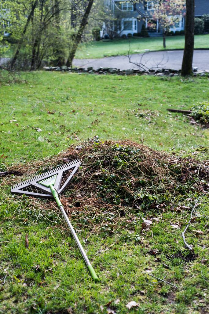 getting rid of pachysandra - Fortunately, it is not difficult to weed it out. If the plant has been there for a long time, then its root systems do go deeper, especially, if as it usually is, it is planted around a tree. But, you can simple tug on the above ground part and start dismantling it.Once you have the shallow stems and leaves out, you can dig out the rest as you go along tilling the ground for new planting. The good thing about working a patch that had a weed like pachysandra or another growing is that the top soil is usually rather rich, loosely compacted and full of happy earthworms. Also, birds tend to be around often because of the worms -leaning to good pollination. In that way, tilling ground that was recently weeded is more advantageous than tilling through a grass patch.
