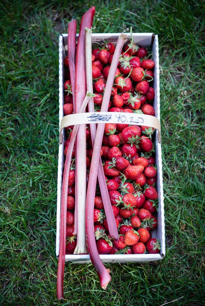 strawberries+rhubarb.jpg