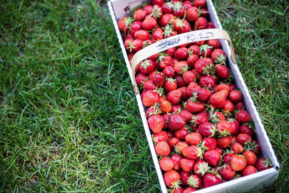 berries-on-ground.jpg