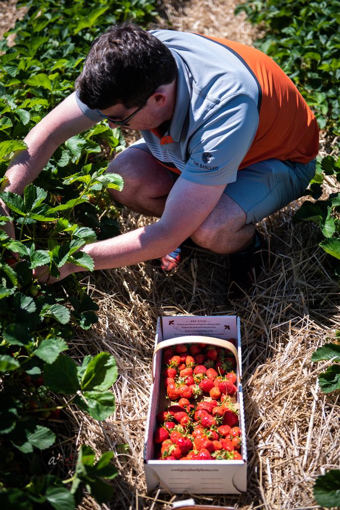 picking-berries.jpg