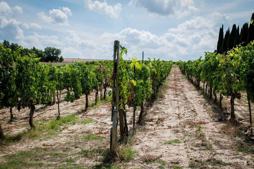 capitoni-family-vineyard.jpg