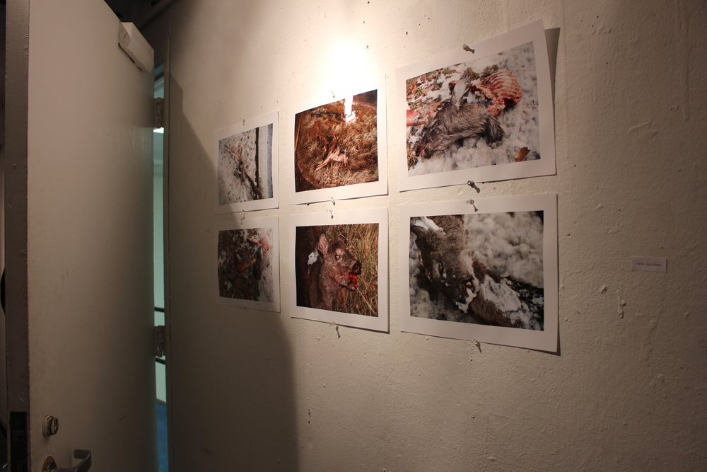 A display of photographs by Jack Califano '16, all depicting various animal carcasses. Photo by Lexie Brown '17