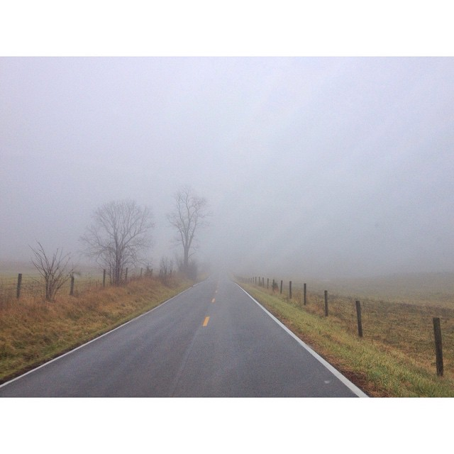 Hello, Friday. So glad you're here. I'm even enjoying the cozy blanket of fog today. #kentuckymist #fog #countryroad