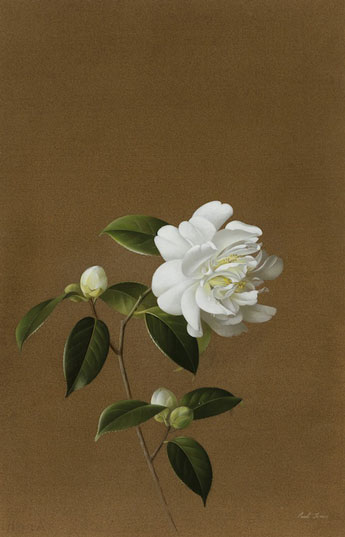 Paul Jones Snow Peony gouache on paper