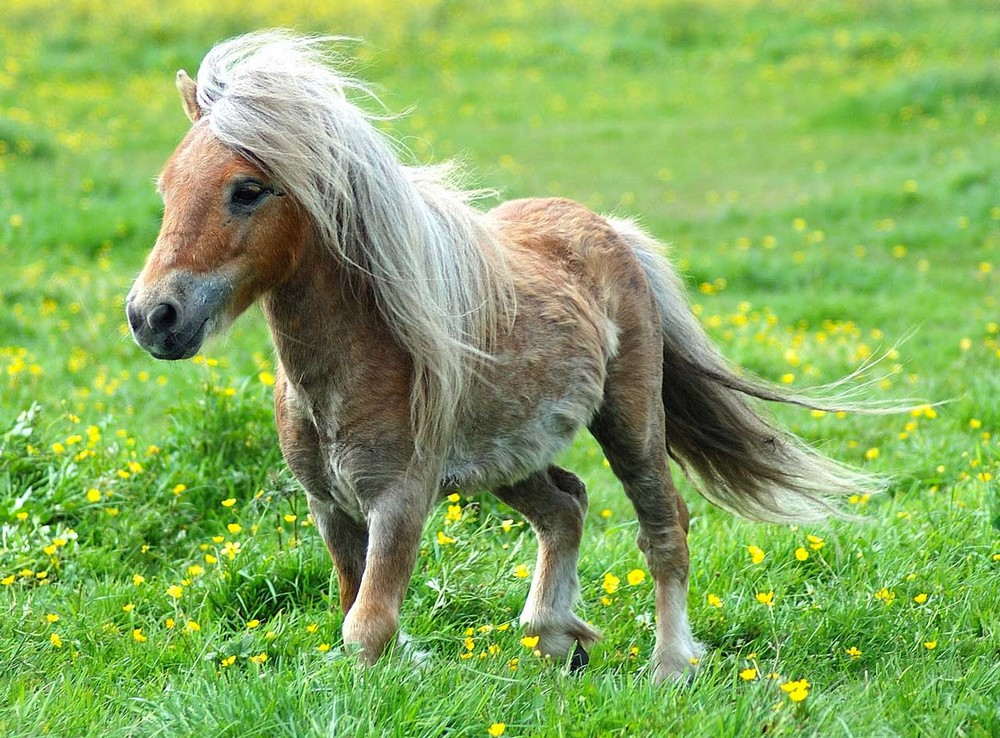 This is a pony, which we've included to try and help you forget what your skin looks like magnified over 1000 times