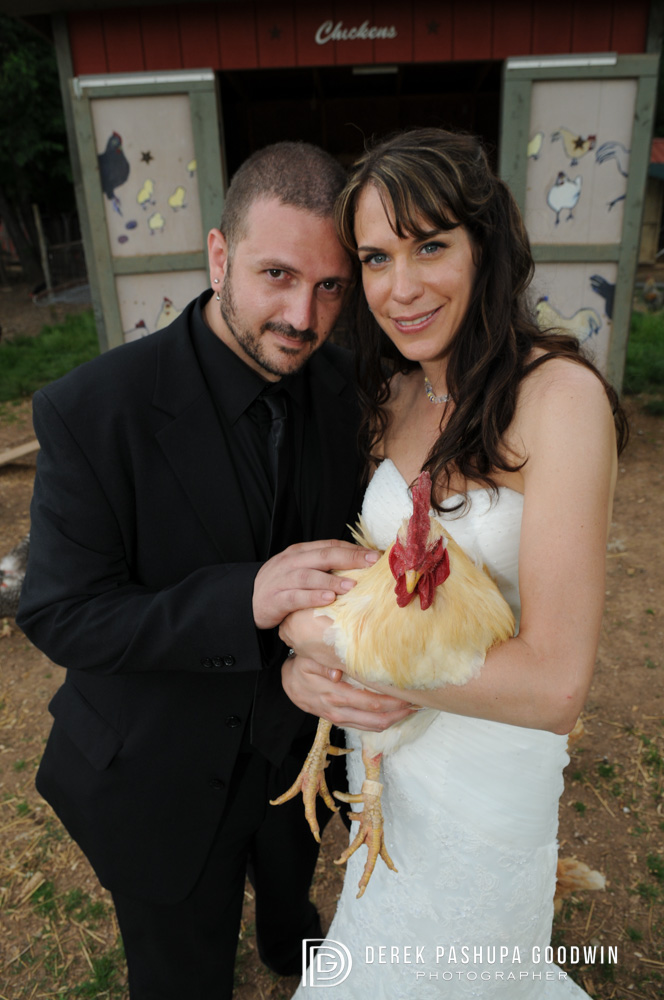 bride and groom with a rooster by chicken shed