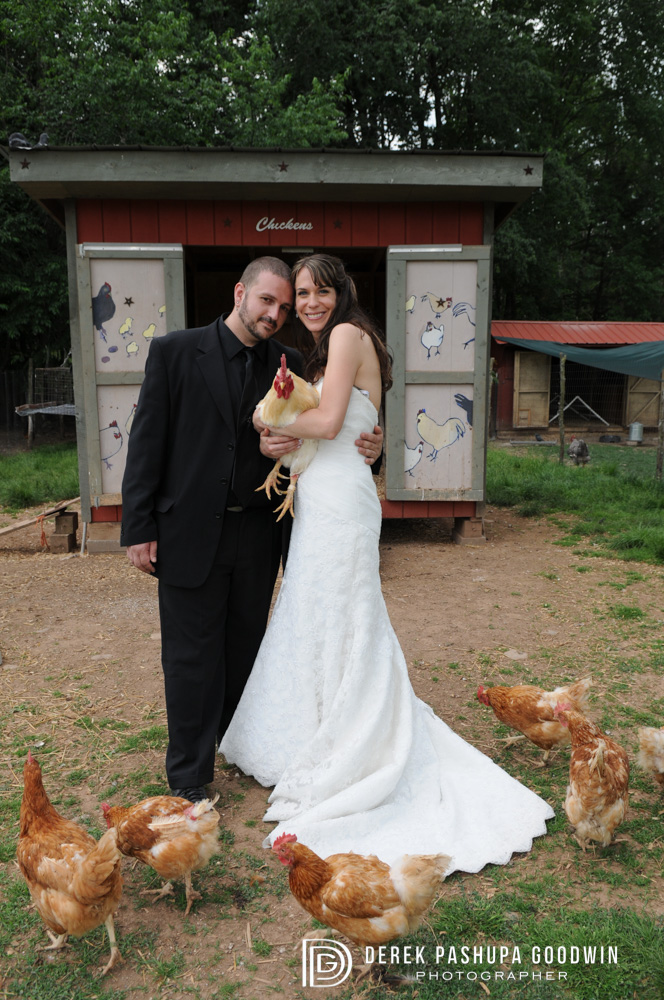 bride and groom with chickens and roosters at woodstock farm animal sanctuary