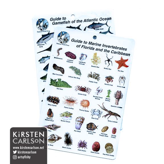 WEB sci plasticIDcards.jpg