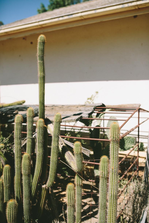 Cactus-3.jpg