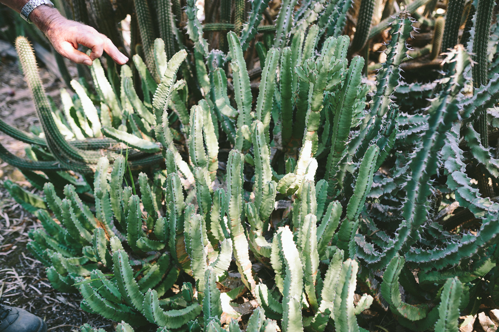 Cactus-14.jpg