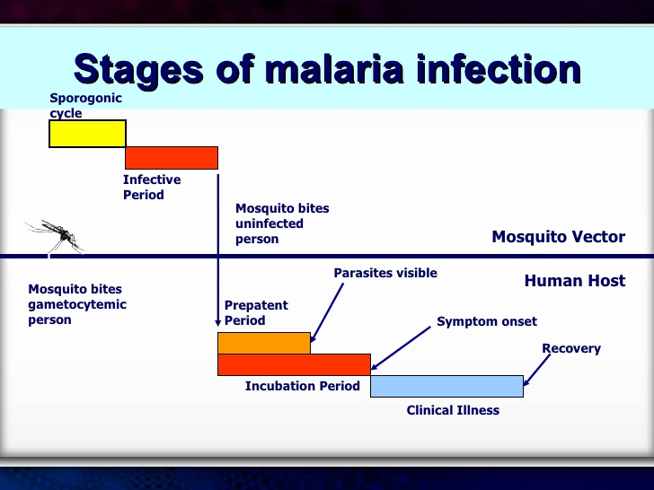 How to Know if You Have Malaria
