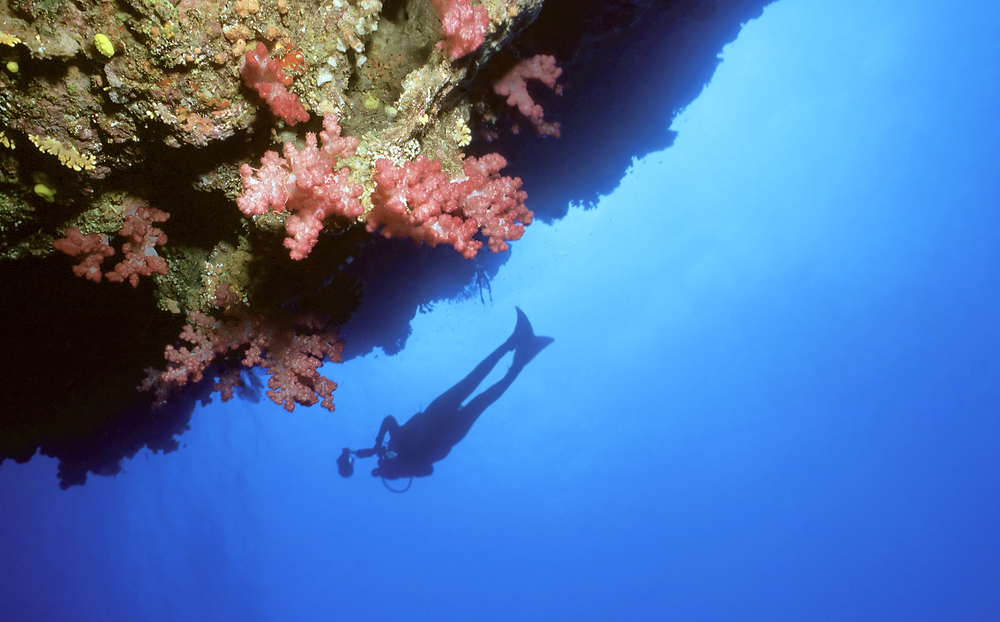 Dive the tropical waters of Fiji