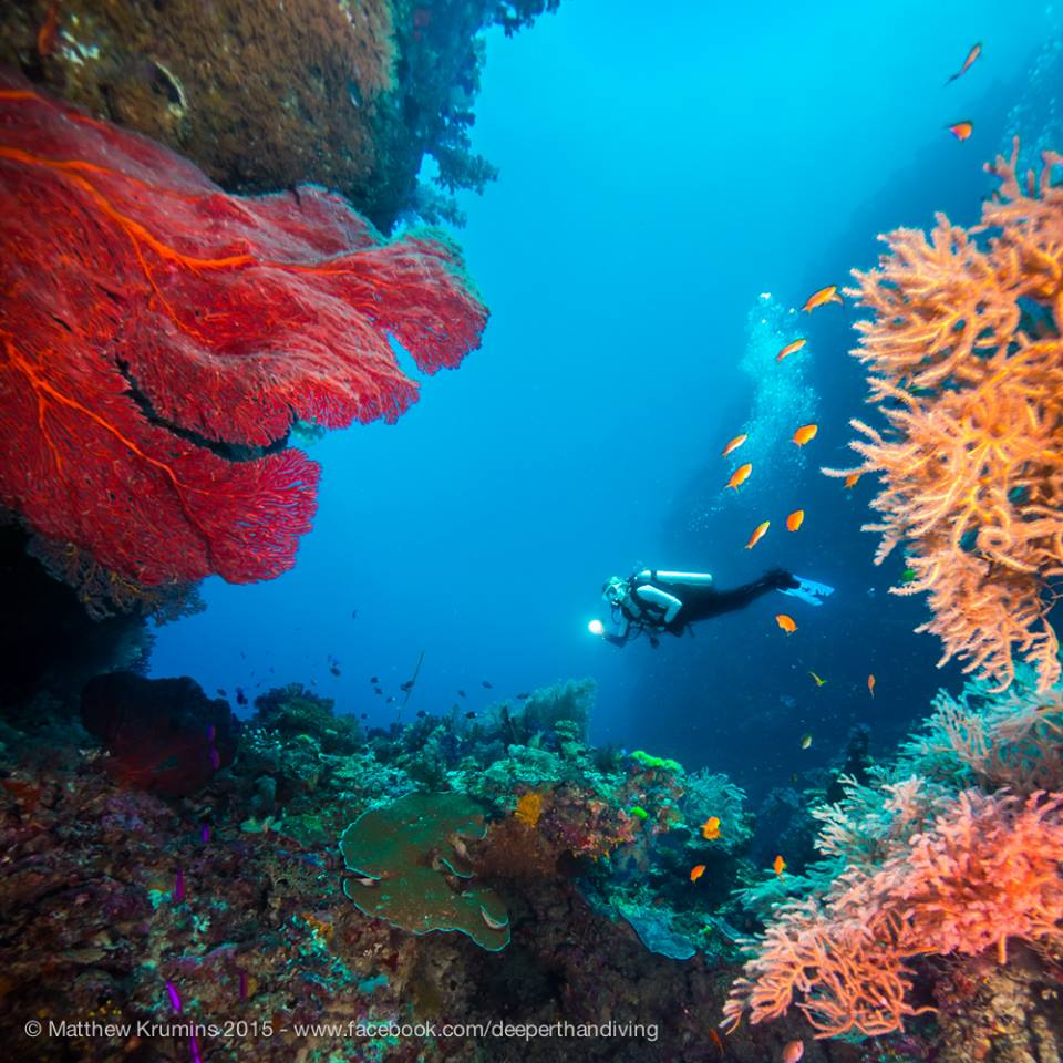 Dive the Rainbow Reef - The Remote Resort Fiji Islands