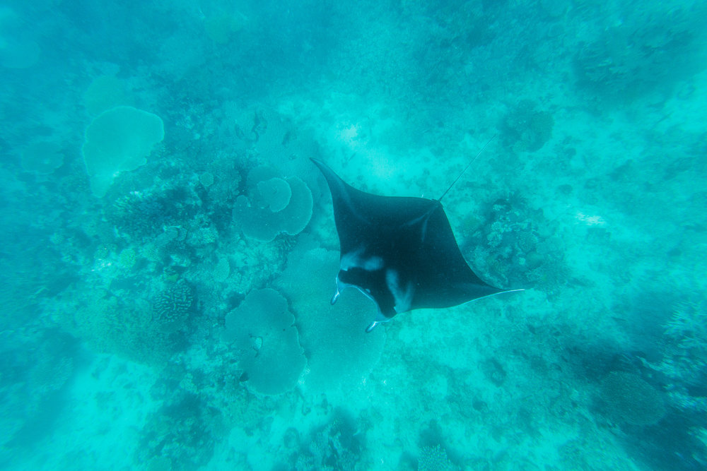 Fiji Manta Ray Snorkel - The Remote Resort, Fiji Islands