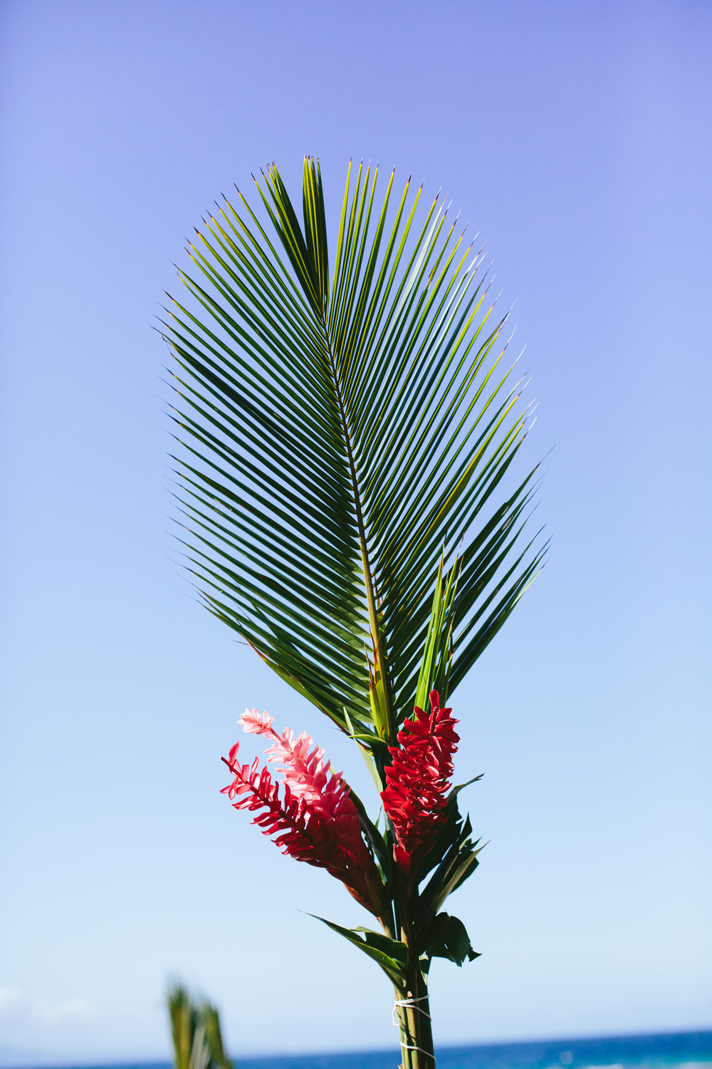 Palm and Red Ginger Aisle - Fiji Wedding Elopement - The Remote Resort Fiji Islands - Aisle decorations