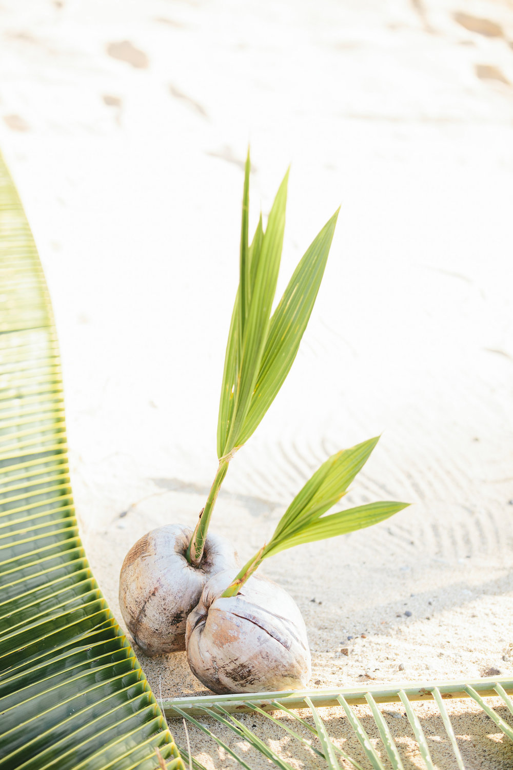 Fiji Coconut Aisle - Fiji Wedding Elopement - The Remote Resort Fiji Islands - Wedding Aisle decorations
