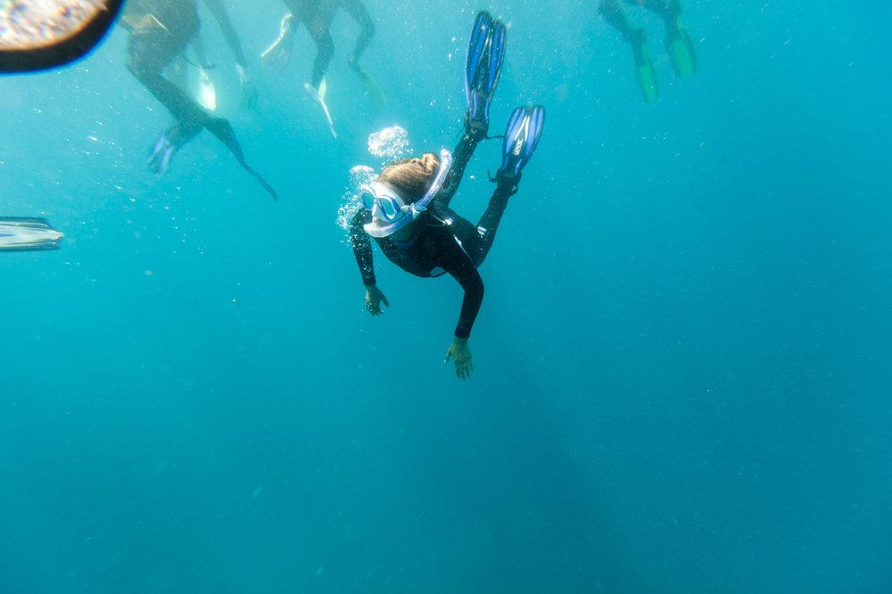 Manta Ray Snorkel Remote Resort Fiji Islands 2.jpg
