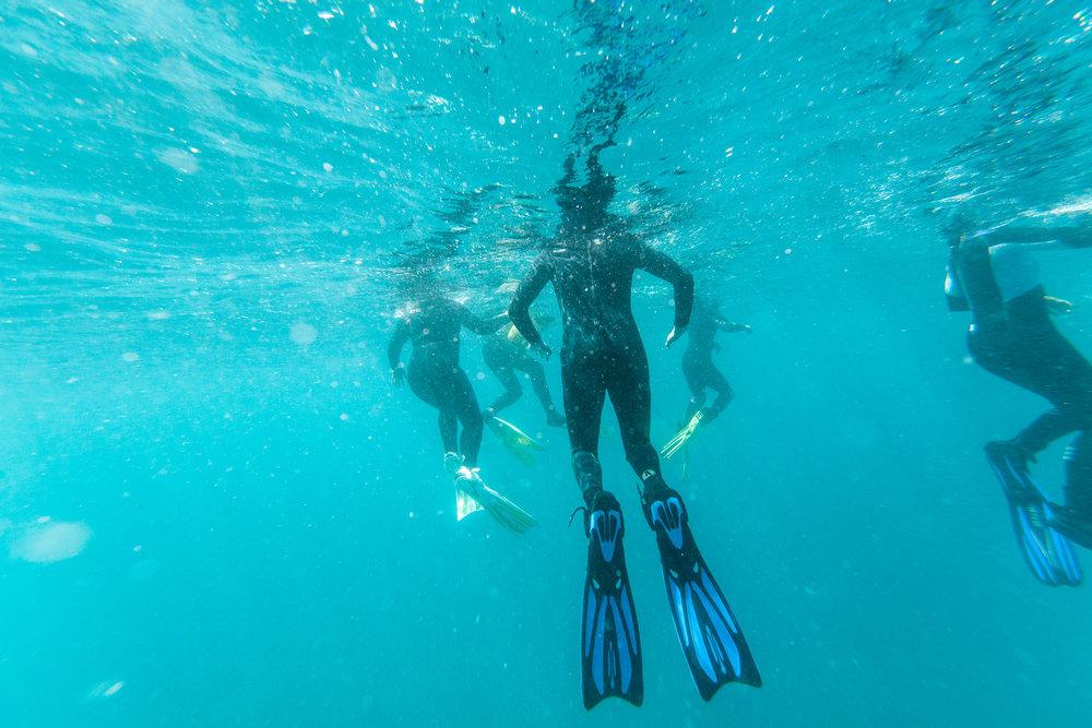 Manta Ray Snorkel Remote Resort Fiji Islands.jpg
