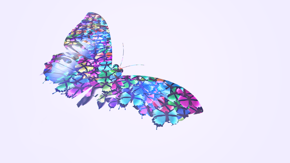 daily_14_butterfly_2.png