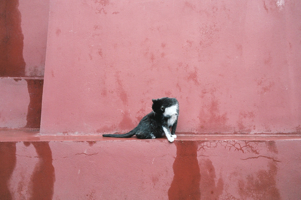 A cat grooming itself in the courtyard