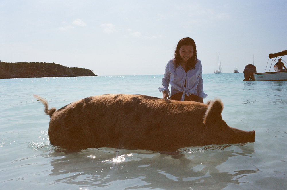 With the famous Bahamian swimming pigs, Exuma Cays