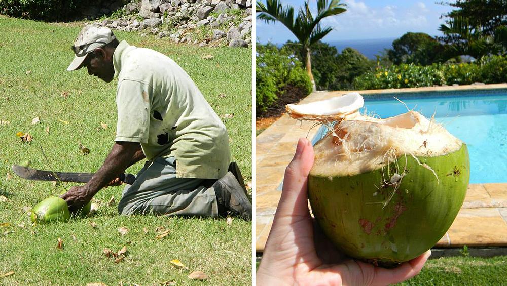 Fresh Butler's Coconuts.jpg