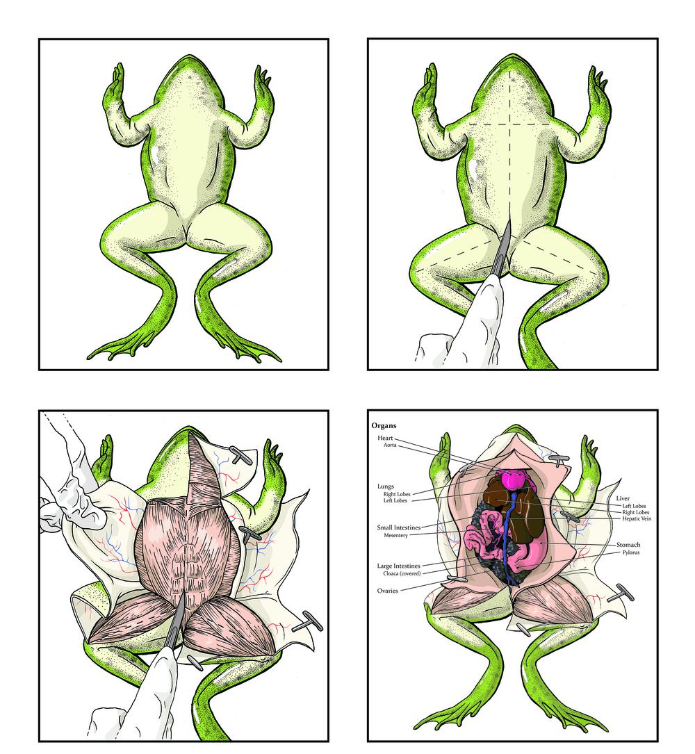 fine art and scientific illustration u2014 nixon medical media