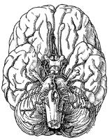 brainpenandink.jpg